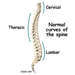 Pilates Spine